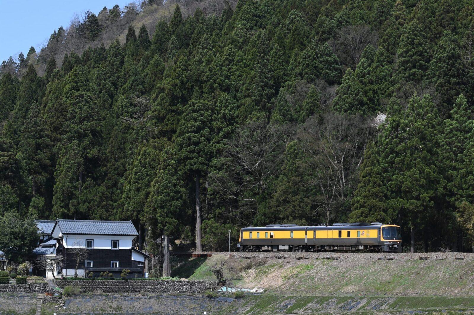 桜咲く越美北線にキヤ141入線